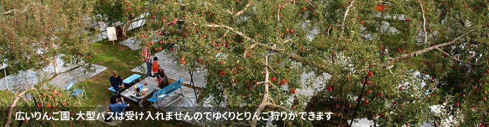 広いりんご園、大型バスは受け入れませんのでゆくりとりんご狩りができます
